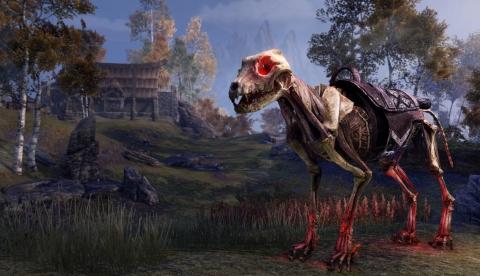 Скелет волка