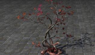 Деревце Предела, Вересковое сердце