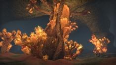 Творческое изображение - На конкурс! Сердце коралла