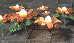 Свадебные Цветы, Персиковые
