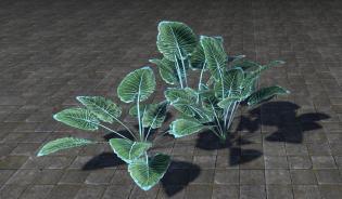 Растение, Скопление Лазурных Лопаточников