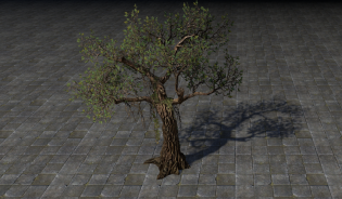 Дерево Ведьмы, Жертва