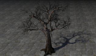 Дерево Ведьмы, Обугленное