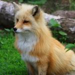Foxund0r