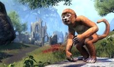 Imgakin Monkey