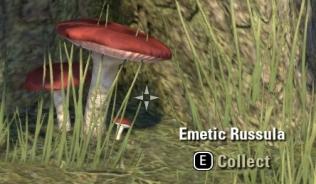 Emetic Russula