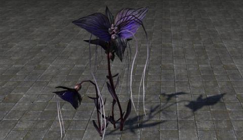 Цветок Летучая Мышь