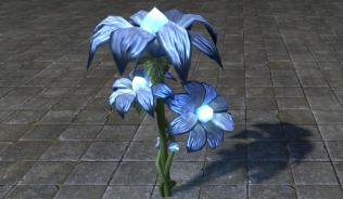 Цветы, Синий Звездоцвет